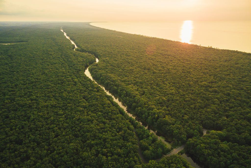 Aerial view of endless canopy of trees at sunset at Pinery Provincial Park